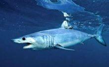 Requins égyptiens en Israël