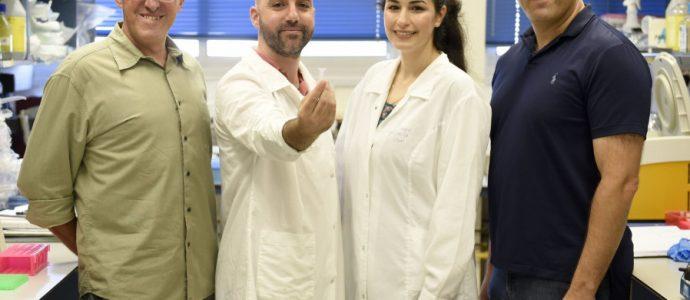 DES SCIENTIFIQUES ISRAÉLIENS STOCKENT DES INFORMATIONS NUMÉRIQUES DANS L'ADN
