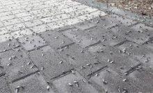 le vol nuptial des termites ailées ont envahi les rues de Bat Yam