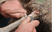 les premières conserves préhistoriques découvertes à Tel Aviv