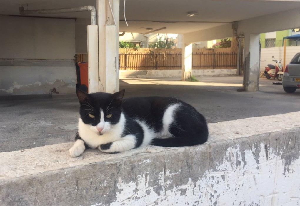 grande campagne de stérilisation pour les chats à Bat Yam