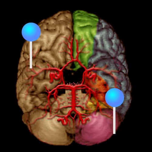 Des scientifiques israéliens apportent un nouvel éclairage sur le fonctionnement du cerveau