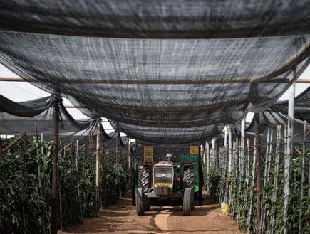Les agriculteurs israéliens des terres louées et rendues à la Jordanie se retrouvent sans moyens de subsistance