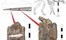 les dinosaures souffraient aussi de tumeurs LCH
