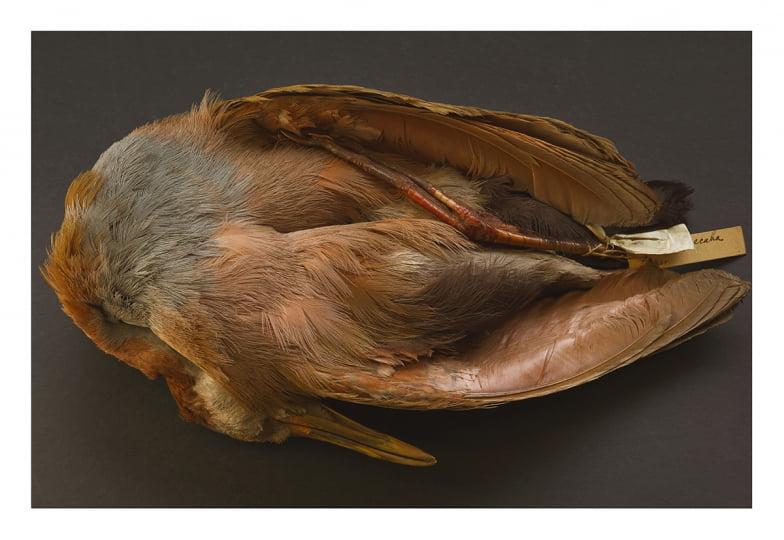 """Annie Leibovitz : au nom de la vie   """"Annie Leibovitz. Nature morte"""", Hauser & Wirth, New York, exposition en ligne, juin 2020."""