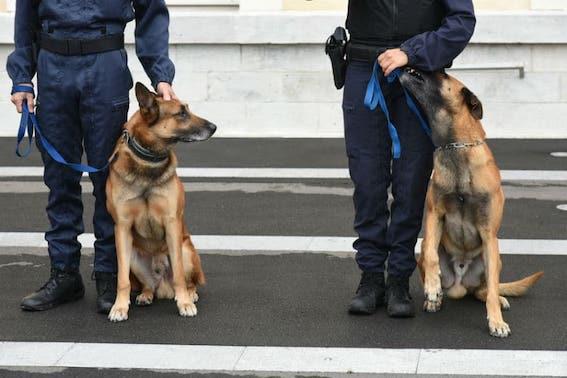 En Israël des chiens renifleurs pour détecter les personnes porteuses de la Covid-19