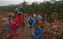 Des volontaires évangéliques récoltent des raisins de merlot pour la cave Tura, dans la colonie de Har Bracha en Cisjordanie à Har Bracha, 23 septembre 2020.Crédit: MENAHEM KAHANA - AFP