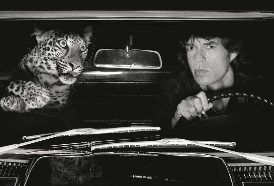 Mick Jagger & leopard 1992 © Albert Watson 106 x 142 cm 35 000 € CERTIFICATE OF AUTHENCITY SIGNED BY THE ARTIST