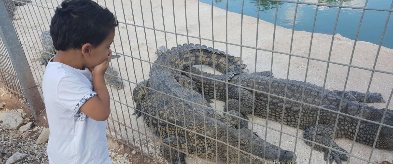 Un enfant de quatre ans mordu par un crocodile dans un zoo en Israël -podcast-