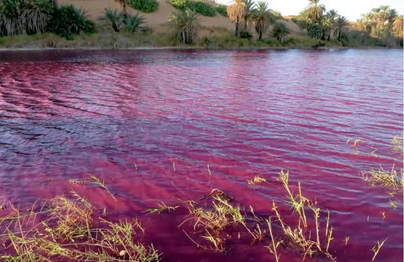 Une mare près de la mer Morte devient rouge sang, les autorités enquêtent