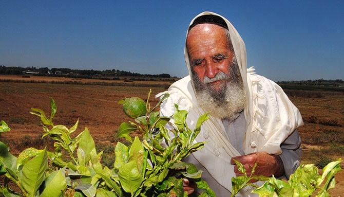 Un rabbin dans son champ du Néguev, en Israël.