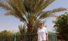 Comment des dattiers vieux de 2000 ans renaissent en Israël