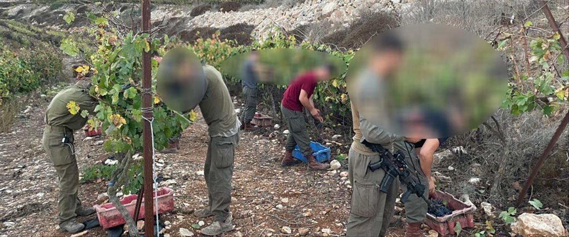 Israël : pourquoi des parachutistes de Tsahal font les vendanges en Judée-Samarie