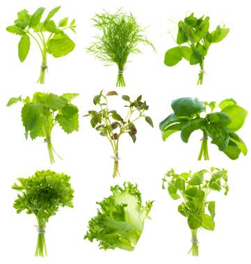 Le pouvoir des herbes alliance le premier magazine de la communaut juive actualit juive - Les herbes aromatiques en cuisine ...