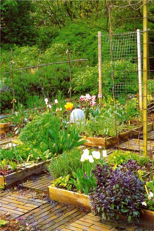 Un insecticide bio base de venin de scorpion cr e en - Jardins en carre ...
