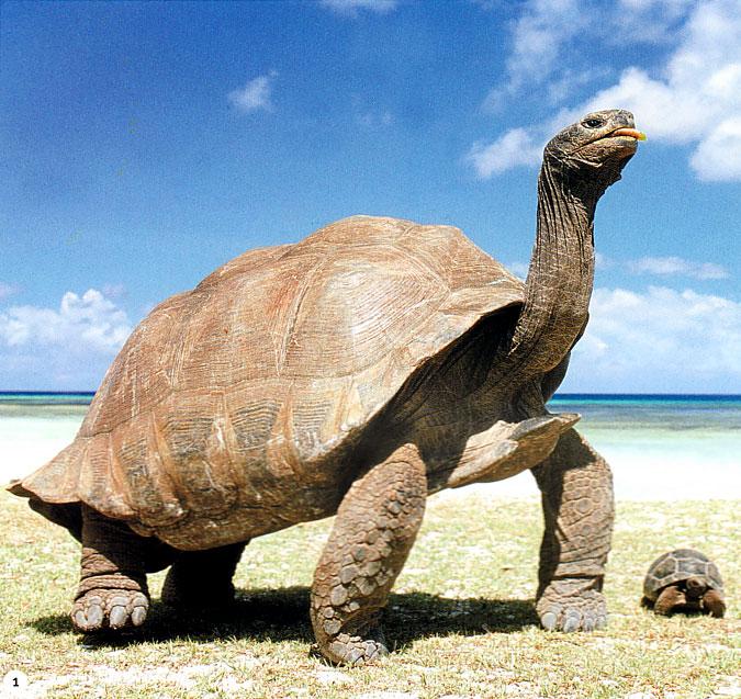 Le vietnam se mobilise pour sauver une tortue g ante - Images tortue ...